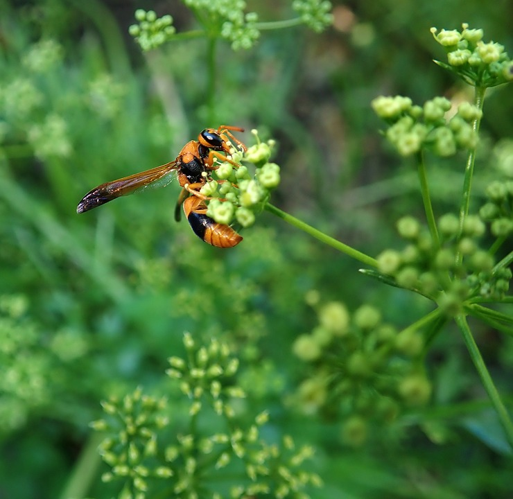 Wasp, Insect, Garden, Nature