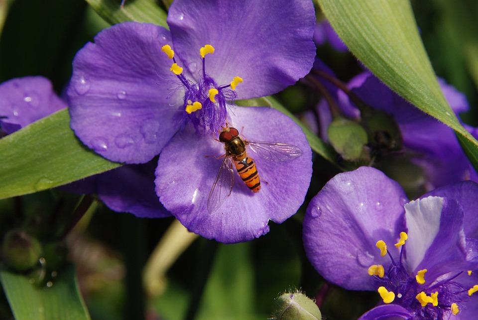 Flower, Purple, Nature, Bug, Wasp, Pestle, Pollen