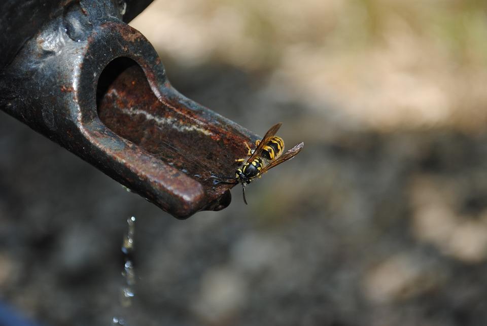 Water, Wasp, Faucet, Nature