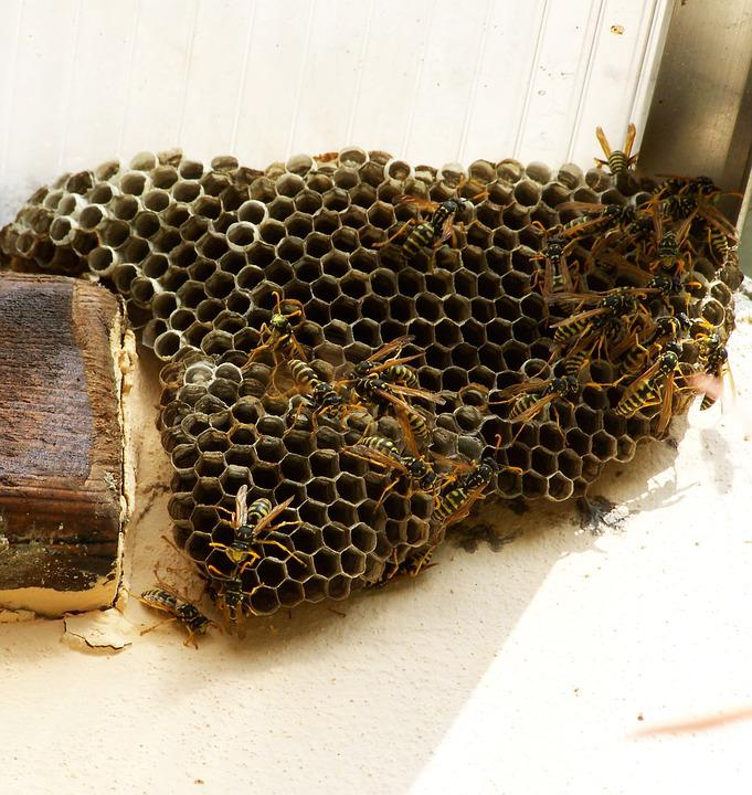 Wasp Nest, Insects, Cellular Structure