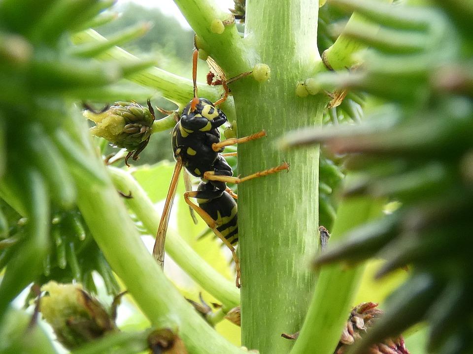 Wasp, Plant, Wonder Tree, Stengel, Nature, Garden