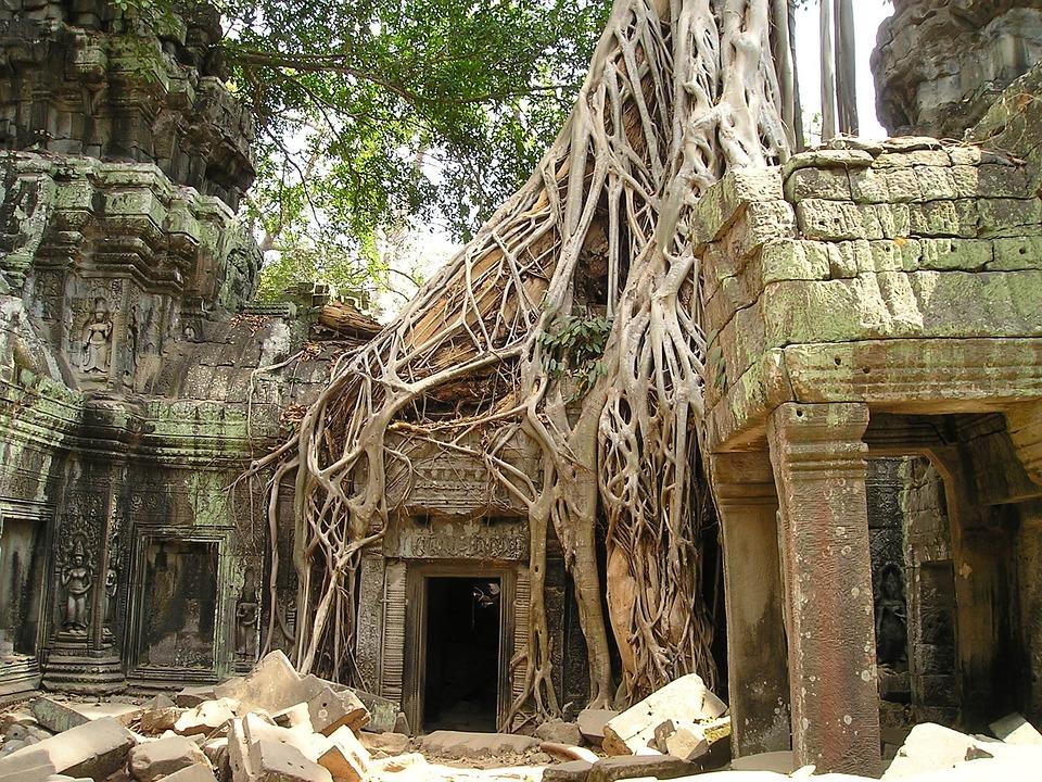 Angkor Wat, Root, Cambodia, Wat, Overgrown, Jungle