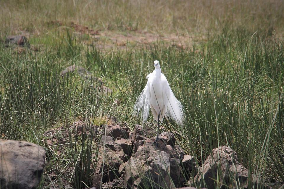 Heron, Egret, Bird, Watching, Spotting, Background