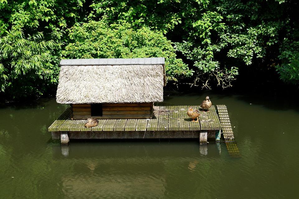 Ducks, Animals, Water, Birds, Waterfowl, Aviary, Stall