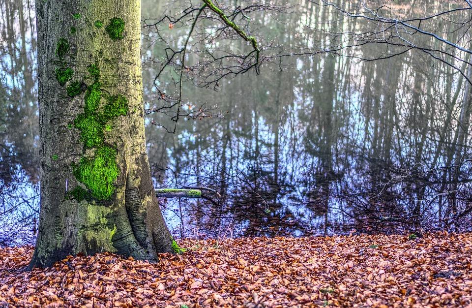 Tree, Nature, Wood, Autumn, Leaf, Water, Lake