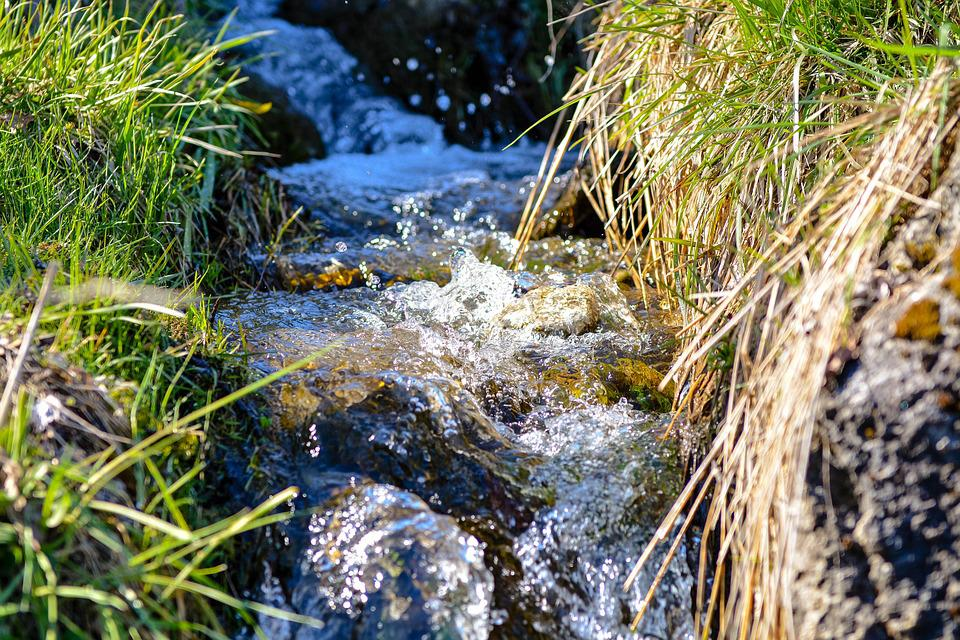 Bach, Natural Stream, Wiesenbach, Water, Running Water