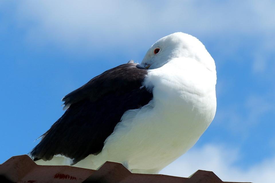 Bird, Seagull, Animal, Water Bird, Plumage, Sea