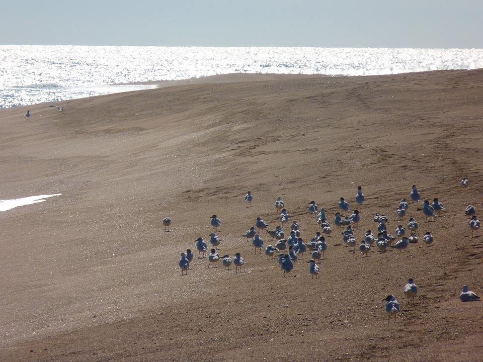 Beach, Seagull, Sea, Sand, Water, Bird, Animal, Wave