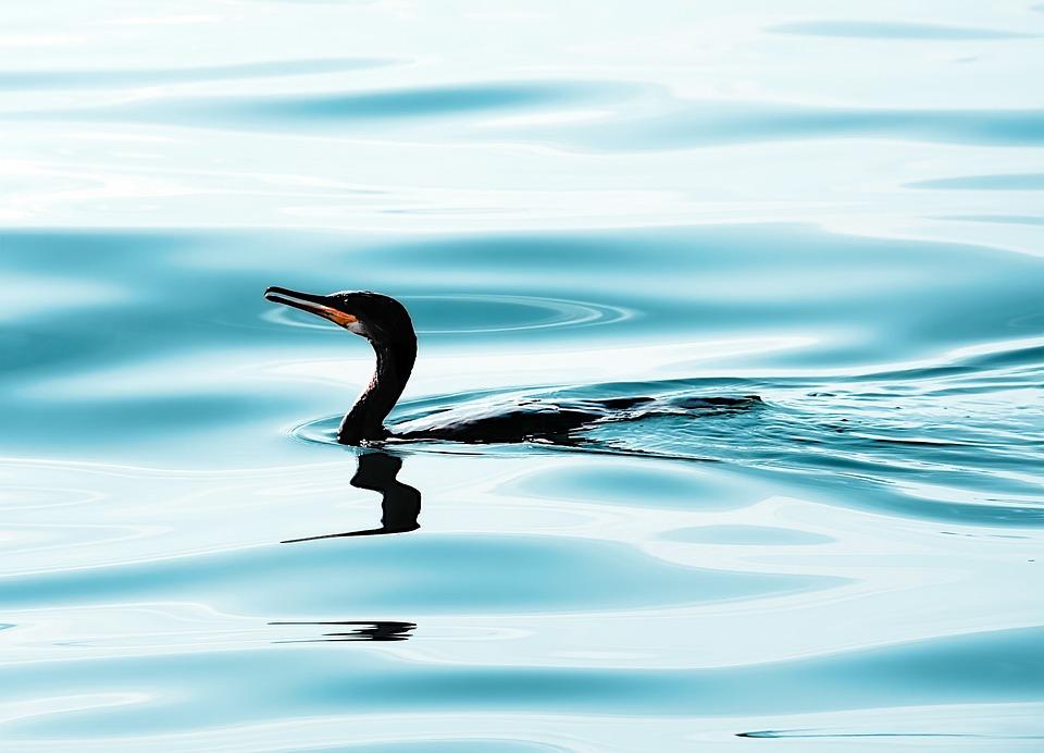 Water Bird, Bird, Silhouette, Croatia, Water, Mood