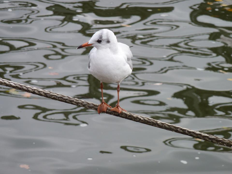 Gull, Water Bird, Fly, Seagull, Young, White Möve