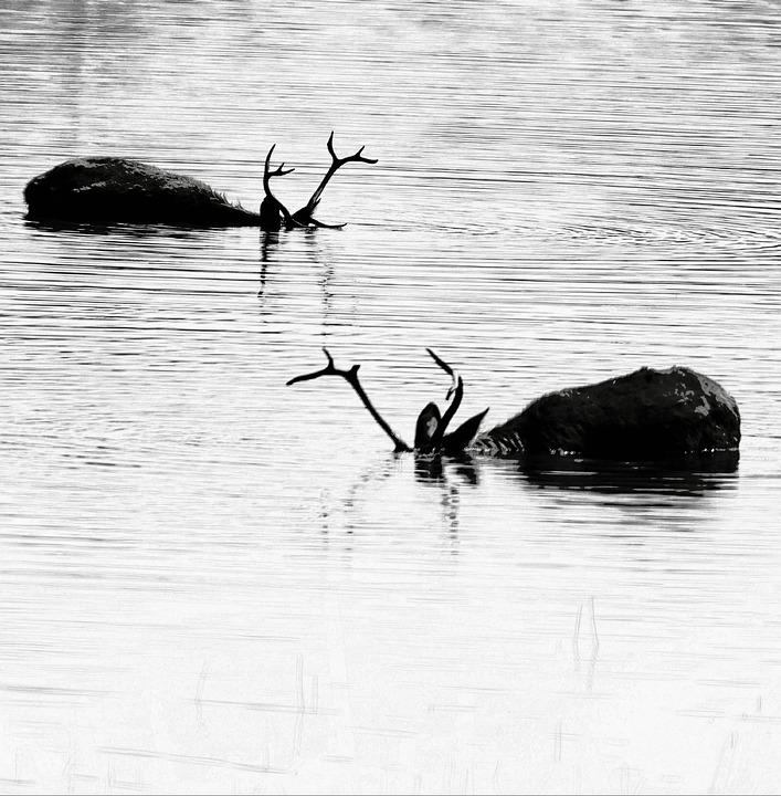 Water, Reflection, Wildlife, Bird, Lake, Nature
