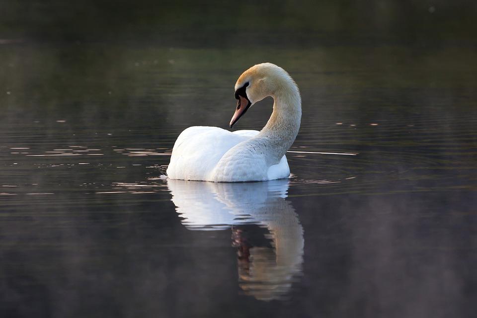 Water, Birds