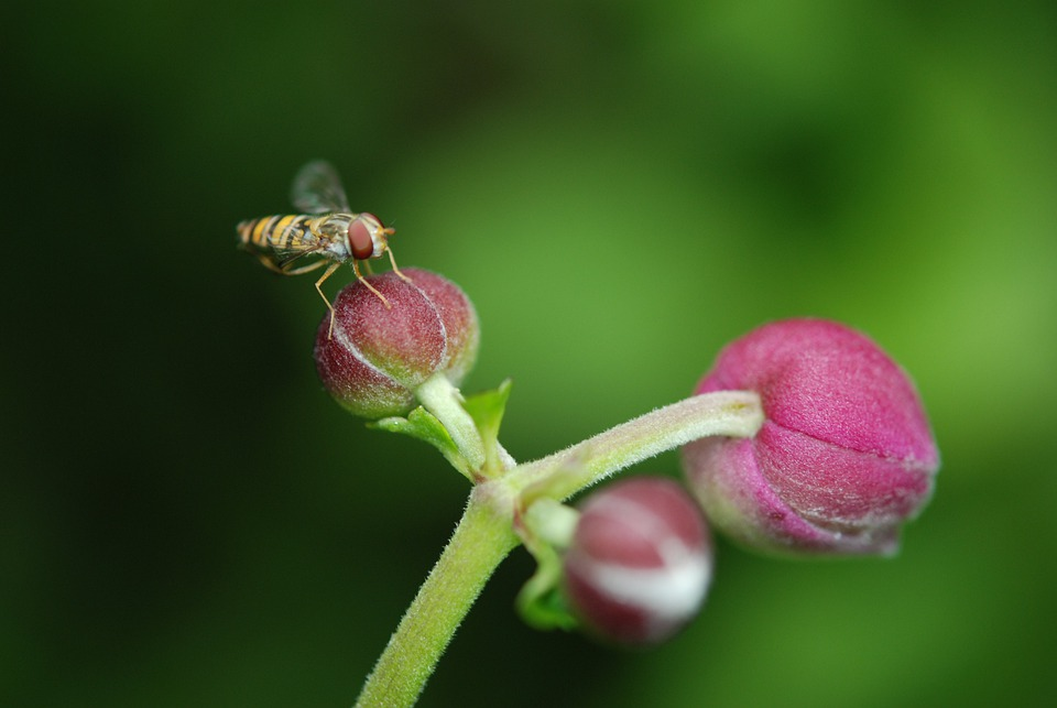 Flower, Bouquet, White, Anemones, Nature, Green, Water