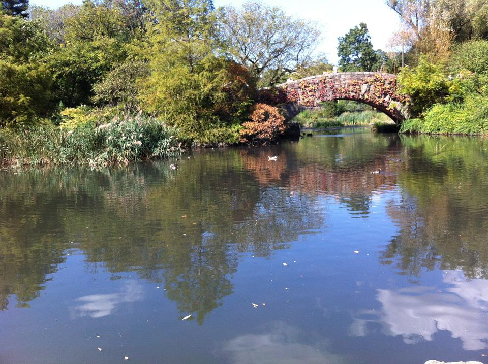 Central Park, New York, Bridge, Water, Nature, Rest