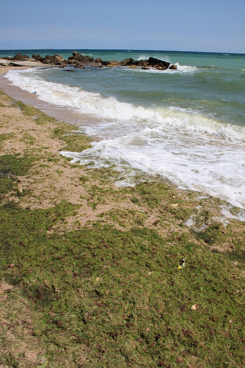 Algae, Beach, Covered, Green, Sea, Seaweed, Water