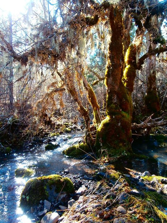 Moss, Brook, Creek, Water, Stream, Landscape