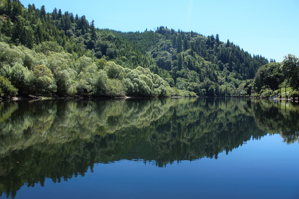 Lakeside, Reflective, Trees, Forest, Water, Crisp