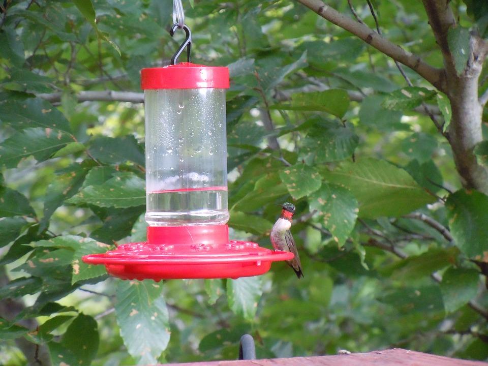 Water Dispenser, Hummingbird, Bird