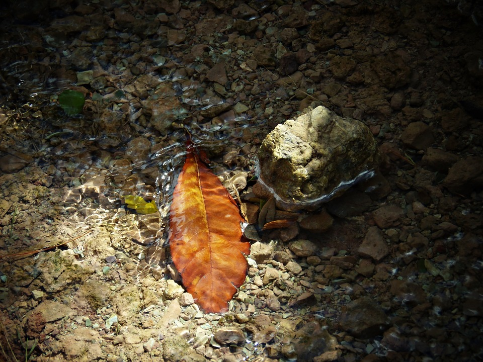 Leaf, Water, Sunset, Autumn, Nature, Dry, Reflection