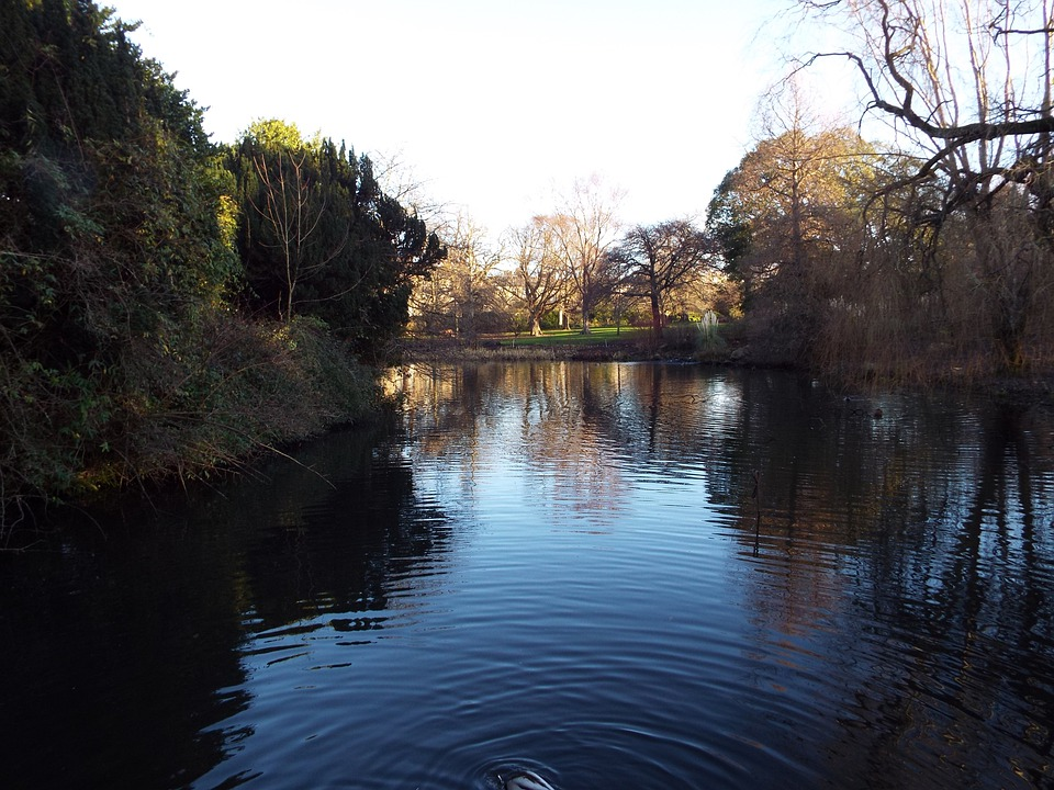 Edinburgh, Botanic Gardens, Water Feature, Lake, Nature