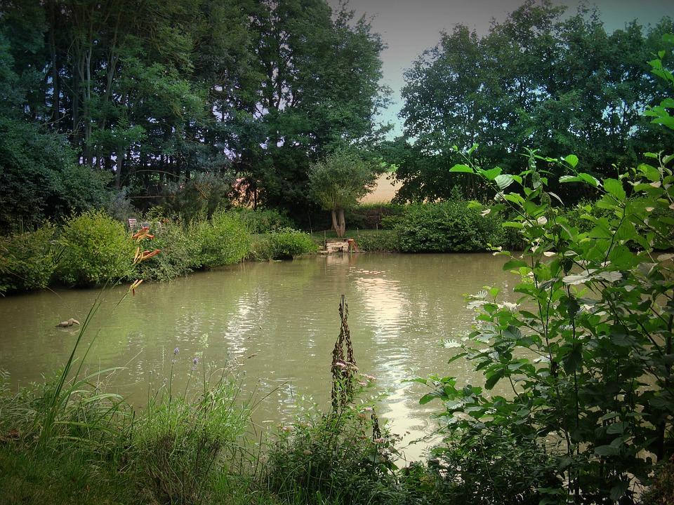 Fish Pond, Carp, Pond, Water, Lake, Landscape, Nature