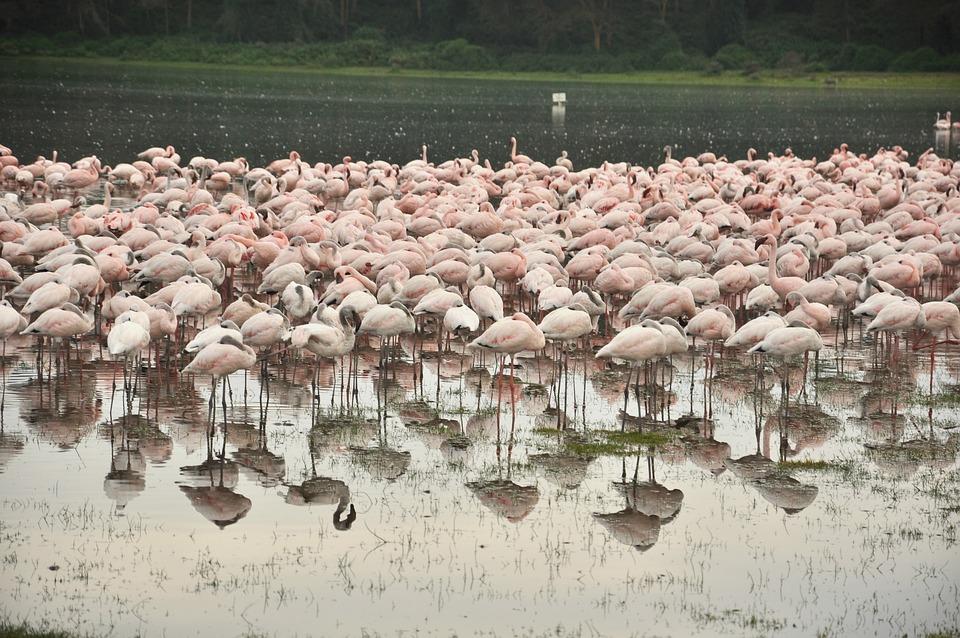 Nature, Water, Outdoors, Flamingo