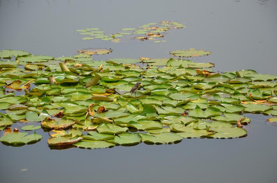 Water, Green, Float