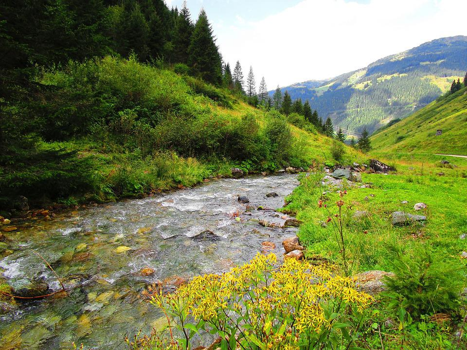 Bach, Water, Meadow, Flow, Austria, Forest, Idyllic
