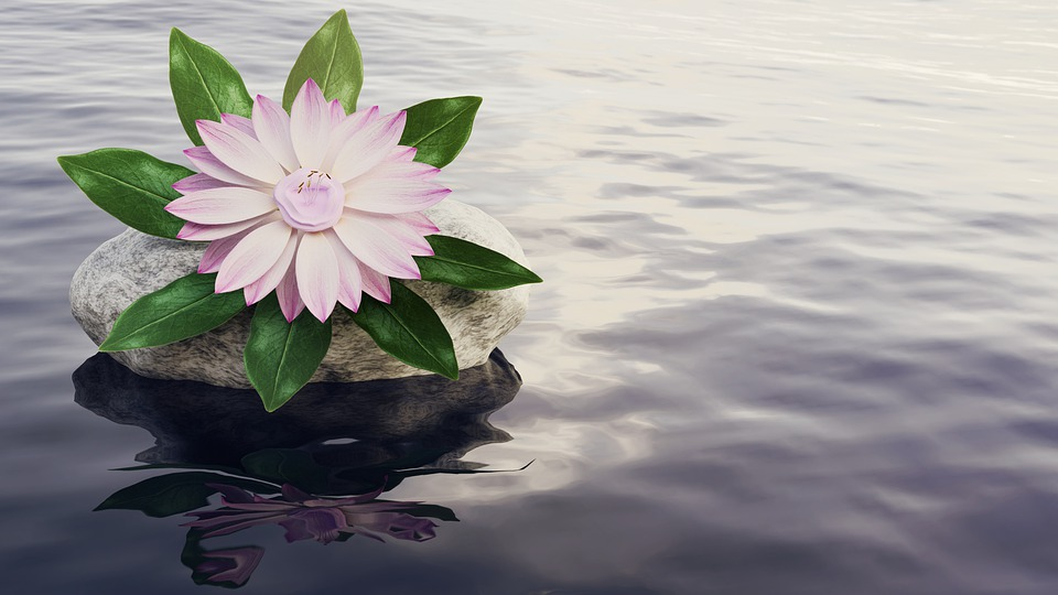 Water, Flower, Blossom, Bloom, Pond, Pink, Water Flower