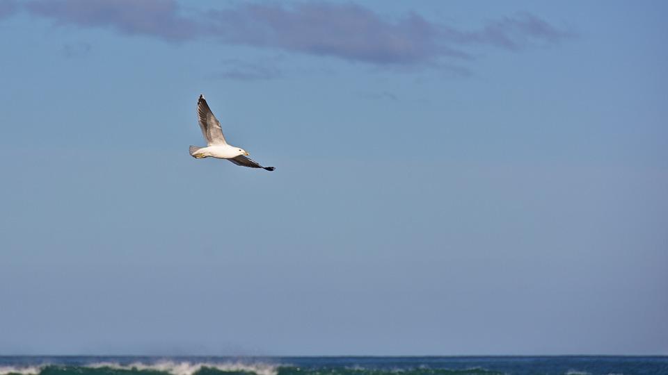 Sea, Ocean, Water, Bird, Flying, Blue, Sky