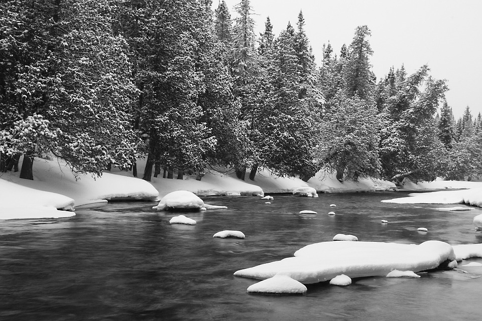 River, Winter, Ice, Frozen, Cold, Forest, Nature, Water