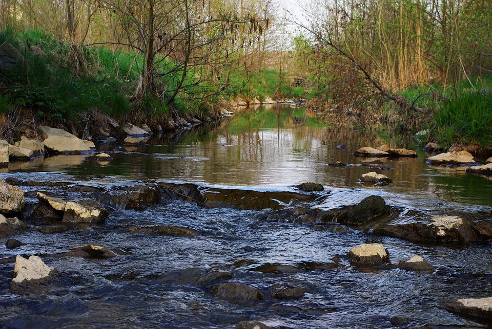 River, Water, Bach, Nature, Forest, Fluent, Weir, Bank