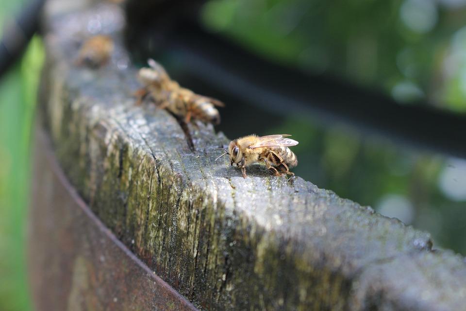 Bees, Water, Barrel, Wood, Wooden Barrels, Garden