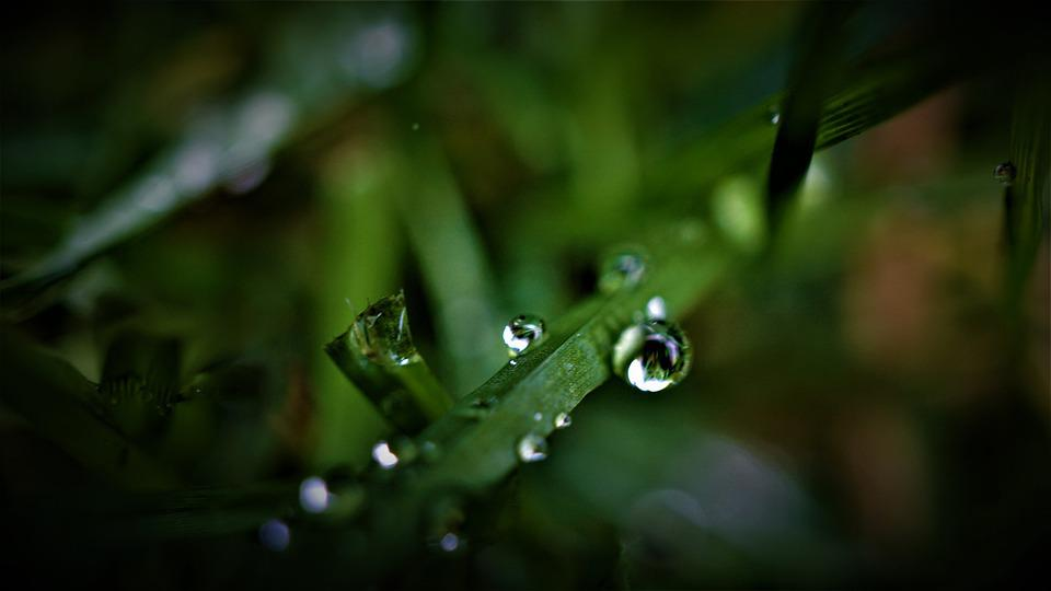 Rain, Weather, Grass, Rush, Water, Wet, Moist, Autumn