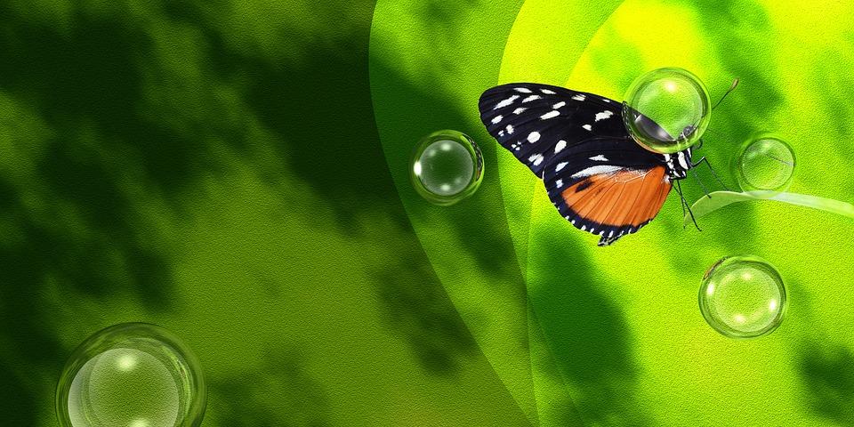 Butterfly, Spring, Green, Water, Bubbles, Garden