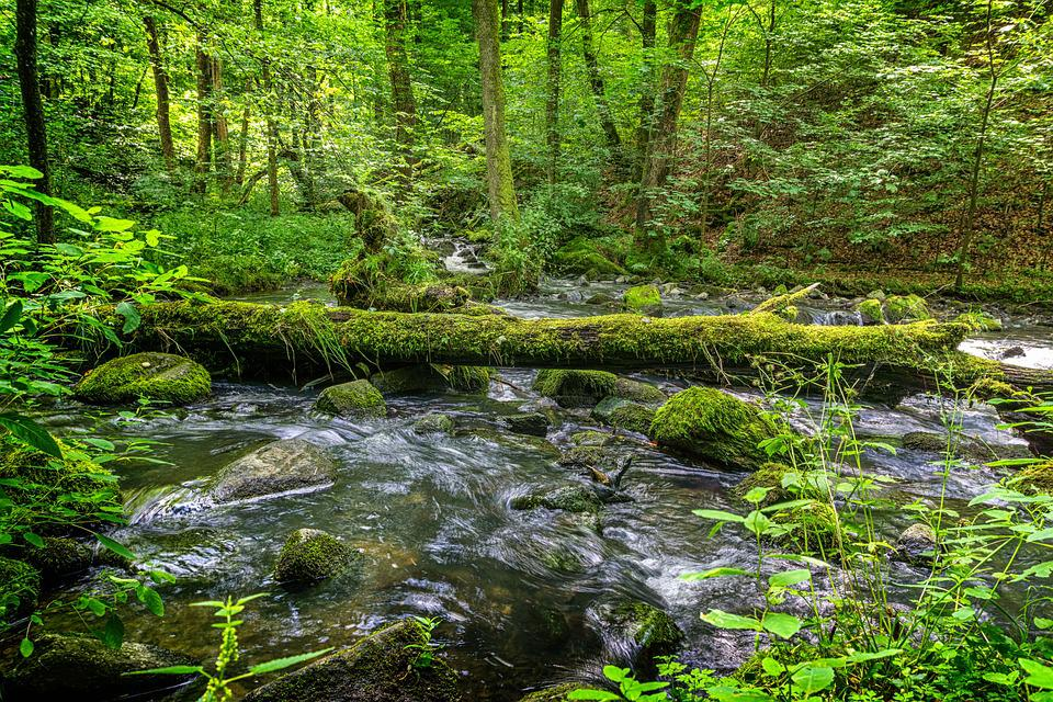 Water, Trees, Green, Moss, Landscape, Gorge, Bach