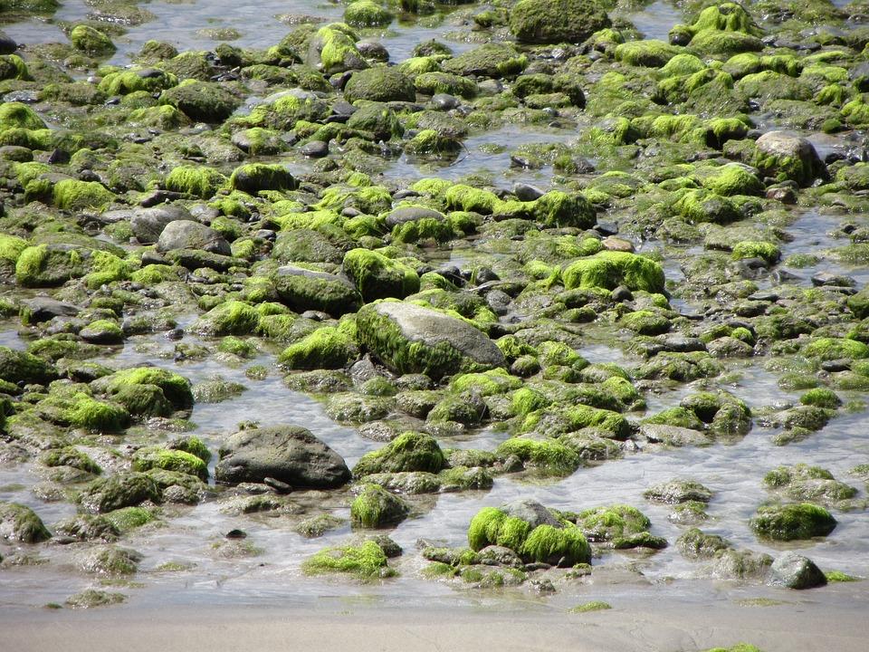 Water, Stones, Seaweed, Green