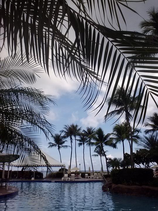 Swimming Pool, Pool, Water, Palms, Guam, Swim, Swimming