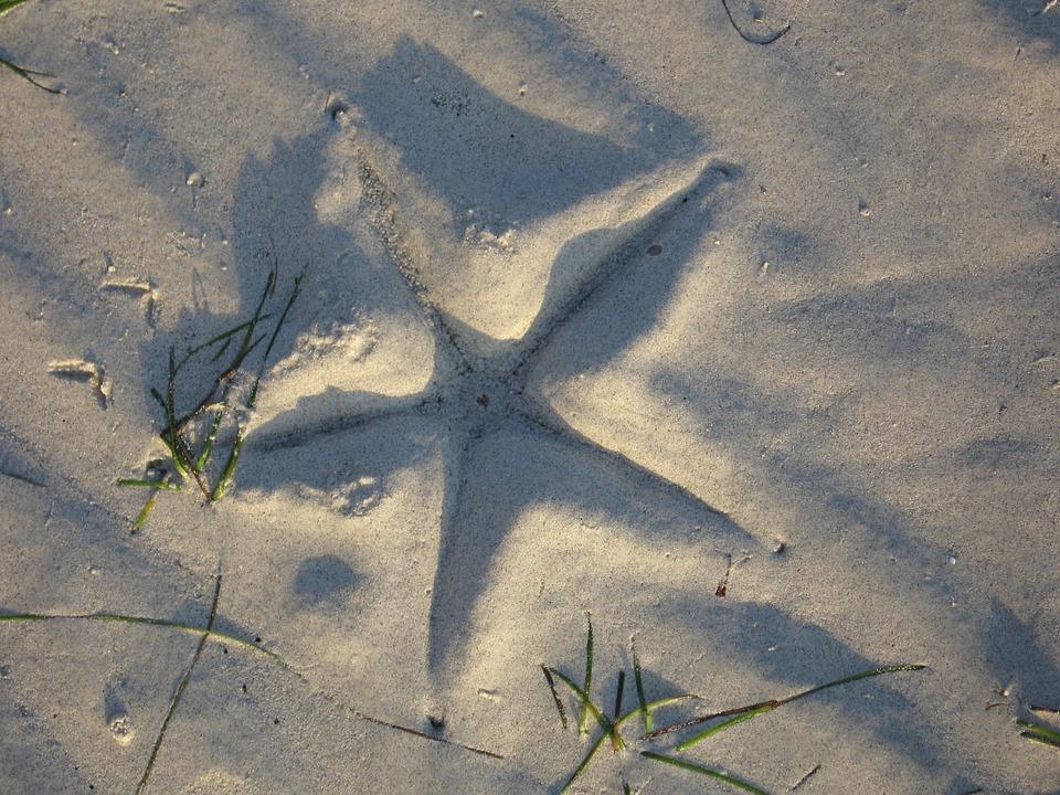 Starfish, Beach, Sea, Holiday, Sand, Water, Summer