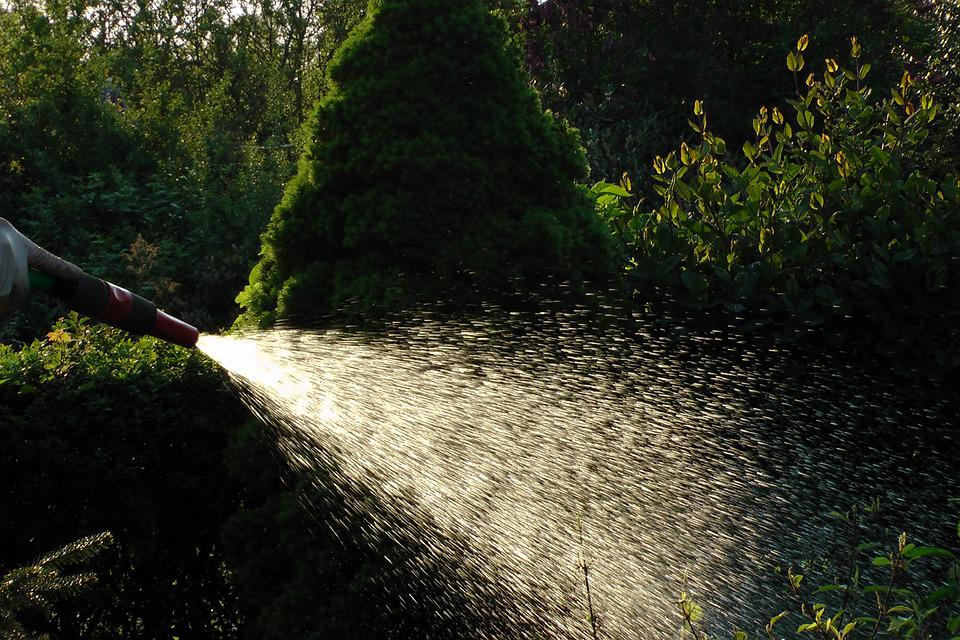 Water, Allotment, Water Jet, Summer, Water Hose, Inject