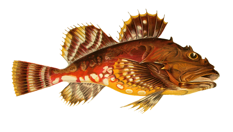 Fish, Animal, Water, Isolated, Exotic, Sea Animal