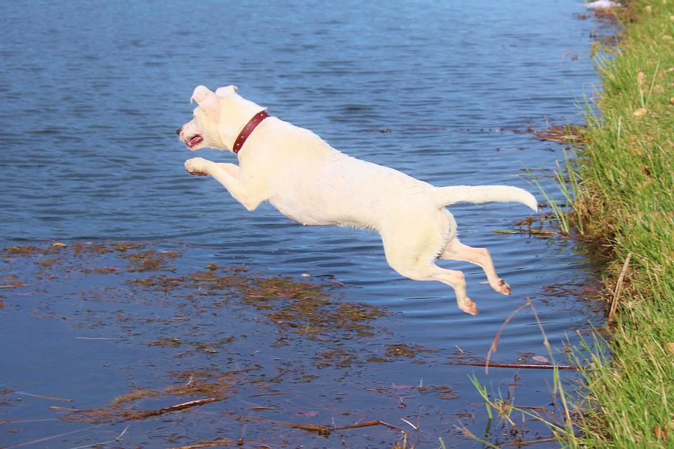 Dog, Jump, Water, Joy, Movement