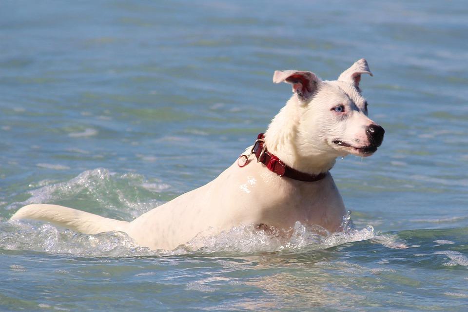 Dog, Sea, Swim, Jump, Ocean, Water, Beach, Movement