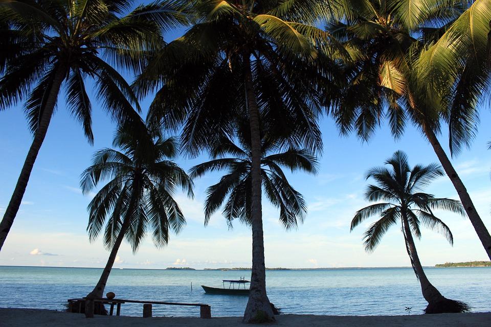 Beach, Coconut Trees, Kei Islands, Nature, Water