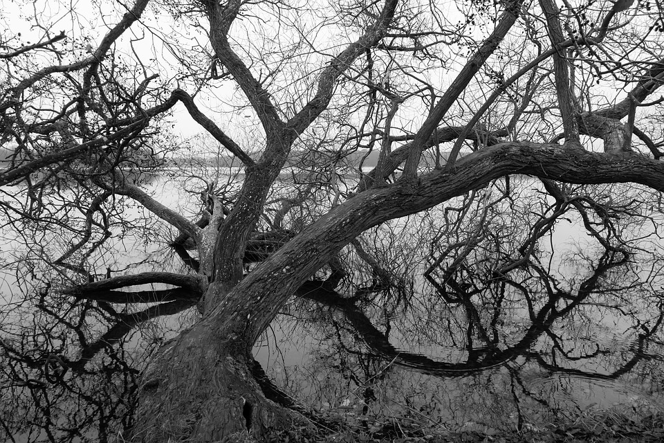 Lake, Wood, Branches, Tribe, Water, Black, White