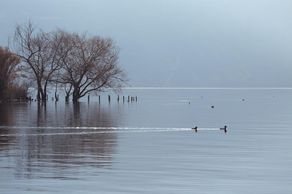 Soft, Lake, Water, Fog, Gray, Calm