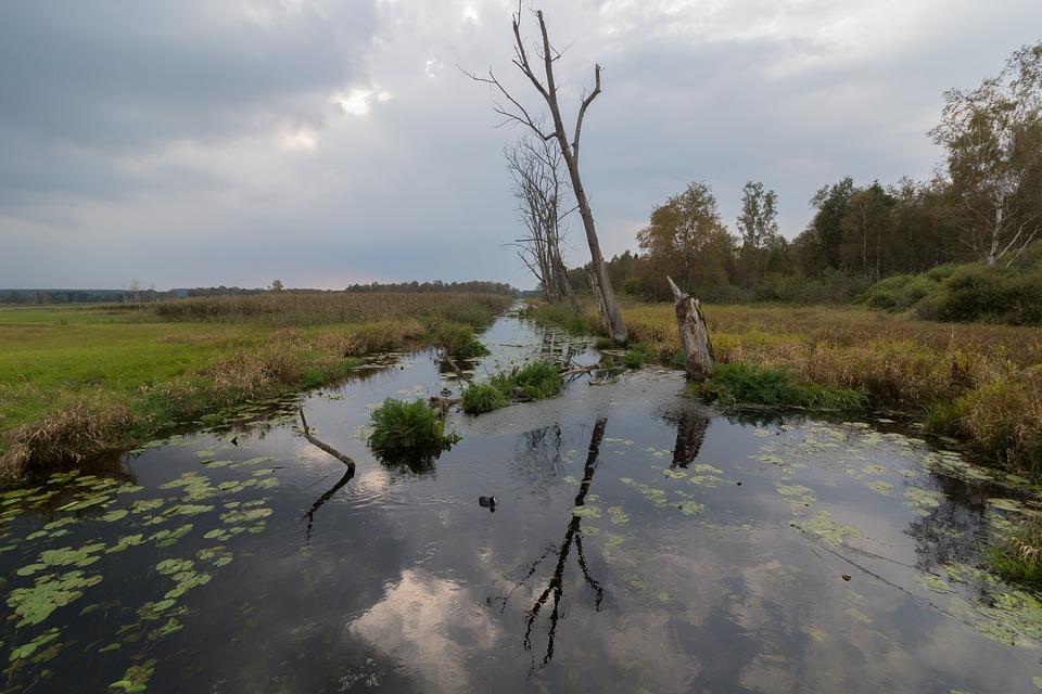 Spring Lake, Water, Swamp, Moor, Nature, Reed, Lake