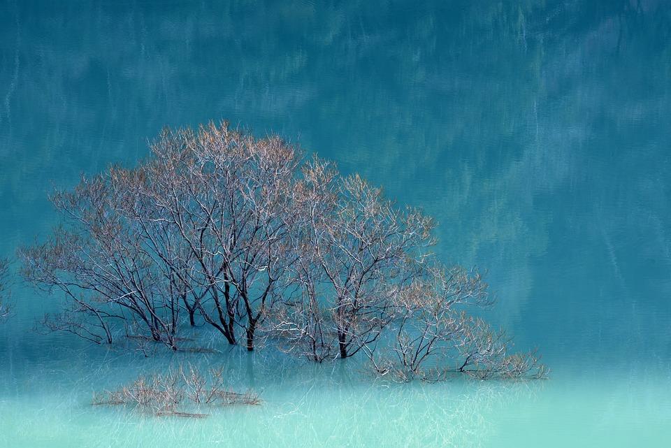 Lake, Lakeside, Water, Landscape, Reflection, Morning