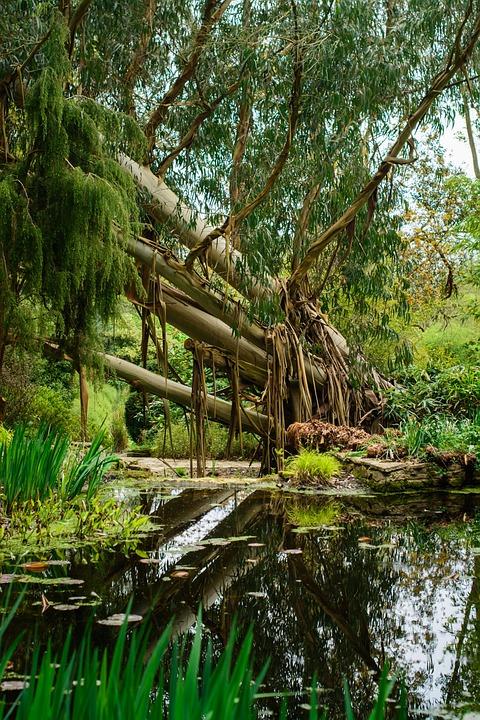 Tree, Water, Reflection, Nature, Landscape, Lake