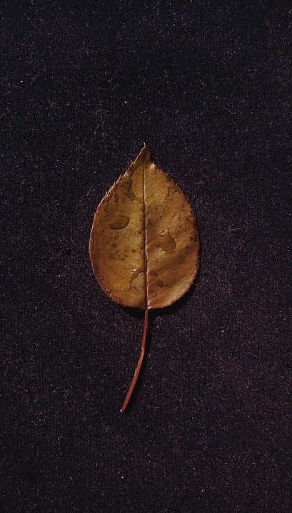 Leaf, Ground, Dew Drops, Rain Drops, Water, Wet